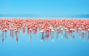 Kenya, lake nakuru-shutterstock_51047290